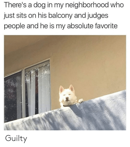 Judges: There's a dog in my neighborhood who  just sits on his balcony and judges  people and he is my absolute favorite Guilty