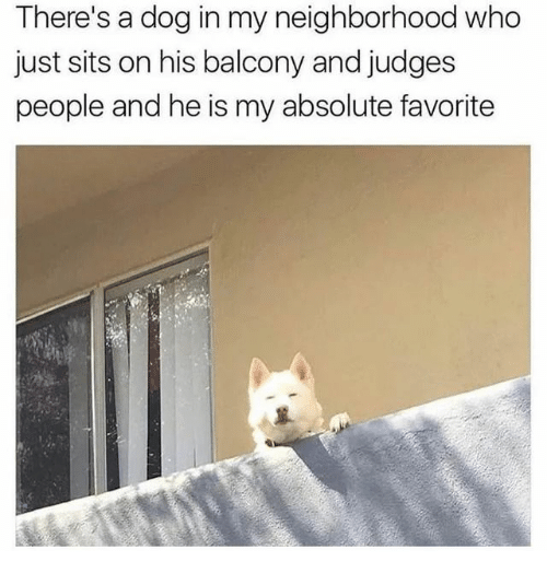 Judges: There's a dog in my neighborhood who  just sits on his balcony and judges  people and he is my absolute favorite