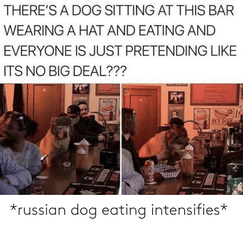 bar: THERE'S A DOG SITTING AT THIS BAR  WEARING A HAT AND EATING AND  EVERYONE IS JUST PRETENDING LIKE  ITS NO BIG DEAL???  Tots  ALCOHOL!  Hat Dog!  ALCOHOL!  Hat Dog  HOT DOGS *russian dog eating intensifies*