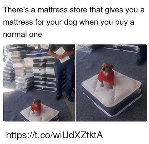 Memes, Mattress, and 🤖: There's a mattress store that gives you a  mattress for your dog when you buy a  normal one https://t.co/wiUdXZtktA