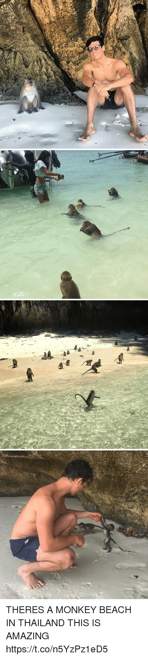 Thailande: THERES A MONKEY BEACH IN THAILAND THIS IS AMAZING https://t.co/n5YzPz1eD5