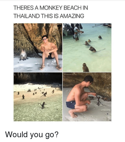 Thailande: THERES A MONKEY BEACH IN  THAILAND THIS IS AMAZING Would you go?