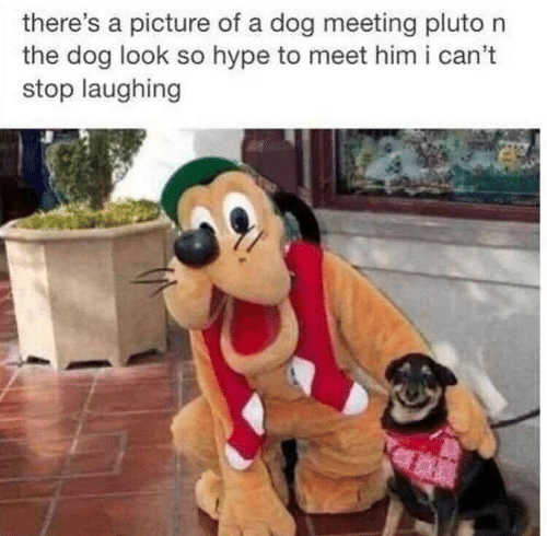 Hype, Pluto, and A Picture: there's a picture of a dog meeting pluto n  the dog look so hype to meet him i can't  stop laughing
