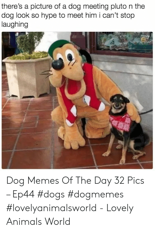 Animals, Dogs, and Hype: there's a picture of a dog meeting pluto n the  dog look so hype to meet him i can't stop  laughing Dog Memes Of The Day 32 Pics – Ep44 #dogs #dogmemes #lovelyanimalsworld - Lovely Animals World