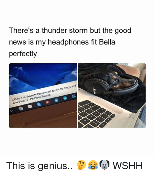 Dogs, Memes, and Music: There's a thunder storm but the good  news is my headphones fit Bella  perfectly  5 Hours of Anxiety Prevention. Music for Dogs and I  and Storms Problem Solved This is genius.. 🤔😂🐶 WSHH