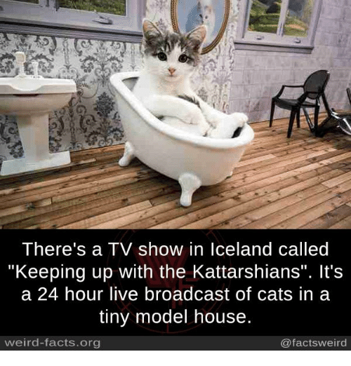 "Cats, Facts, and Memes: There's a TV show in Iceland called  Keeping up with the Kattarshians"". It's  a 24 hour live broadcast of cats in a  tiny model house  weird-facts.org  @factsweird"