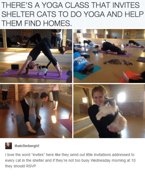 """Cats, Love, and Help: THERE'S A YOGA CLASS THAT INVITES  SHELTER CATS TO DO YOGA AND HELP  THEM FIND HOMES  thatclimbergirl  I love the word """"invites"""" here like they send out little invitations addressed to  every cat in the shelter and if they're not too busy Wednesday morning at 10  they should RSVP"""