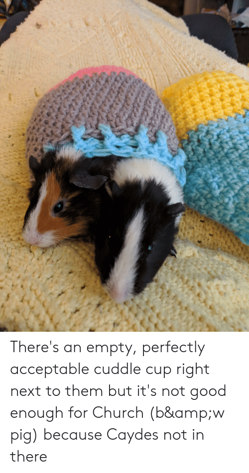 Church, Good, and Nope: There's an empty, perfectly acceptable cuddle cup right next to them but it's not good enough for Church (b&w pig) because Caydes not in there