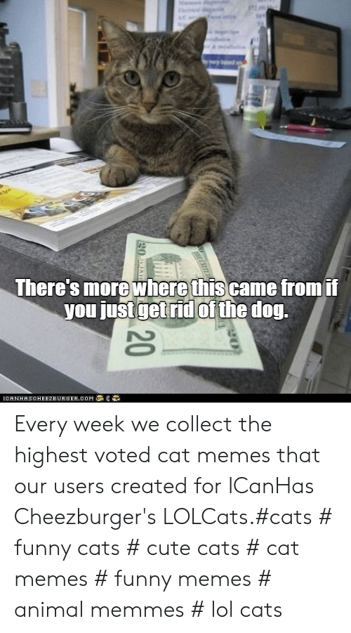 LOLcats: There's more where thiscame fromii  you just getrid of the dog Every week we collect the highest voted cat memes that our users created for ICanHas Cheezburger's LOLCats.#cats # funny cats # cute cats # cat memes # funny memes # animal memmes # lol cats