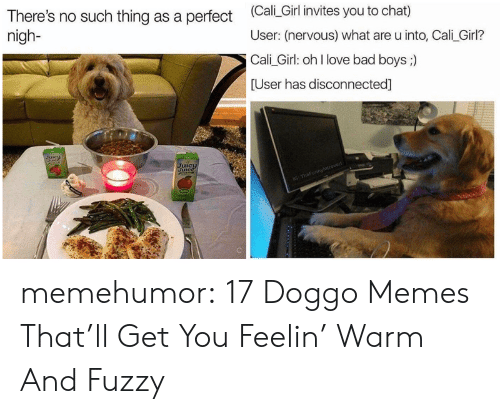 Bad, Bad Boys, and Lit: There's no such thing as a perfect Cali Girl invites you to chat)  nigh-  User: (nervous) what are u into, Cali_Girl?  Cali Girl: oh l love bad boys ;)  User has disconnected]  Lit memehumor:  17 Doggo Memes That'll Get You Feelin' Warm And Fuzzy