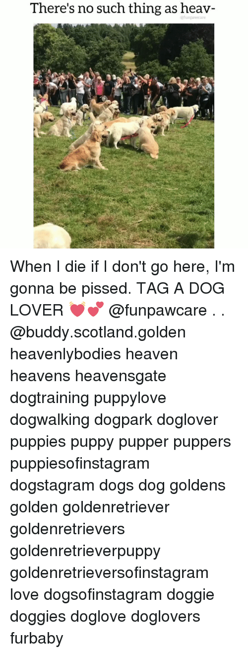 Dogs, Heaven, and Love: There's no such thing as heav- When I die if I don't go here, I'm gonna be pissed. TAG A DOG LOVER 💓💕 @funpawcare . . @buddy.scotland.golden heavenlybodies heaven heavens heavensgate dogtraining puppylove dogwalking dogpark doglover puppies puppy pupper puppers puppiesofinstagram dogstagram dogs dog goldens golden goldenretriever goldenretrievers goldenretrieverpuppy goldenretrieversofinstagram love dogsofinstagram doggie doggies doglove doglovers furbaby