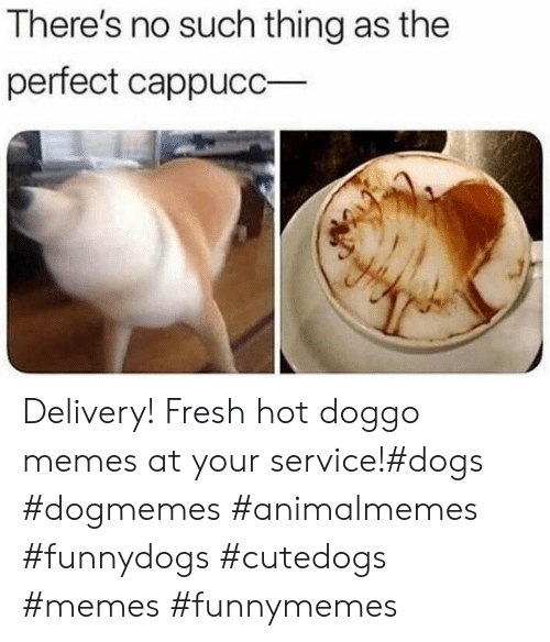 Dogs, Fresh, and Memes: There's no such thing as the  perfect cappucC Delivery! Fresh hot doggo memes at your service!#dogs #dogmemes #animalmemes #funnydogs #cutedogs #memes #funnymemes