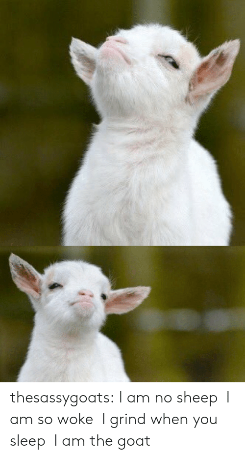 The Goat: thesassygoats: I am no sheep  I am so woke  I grind when you sleep  I am the goat