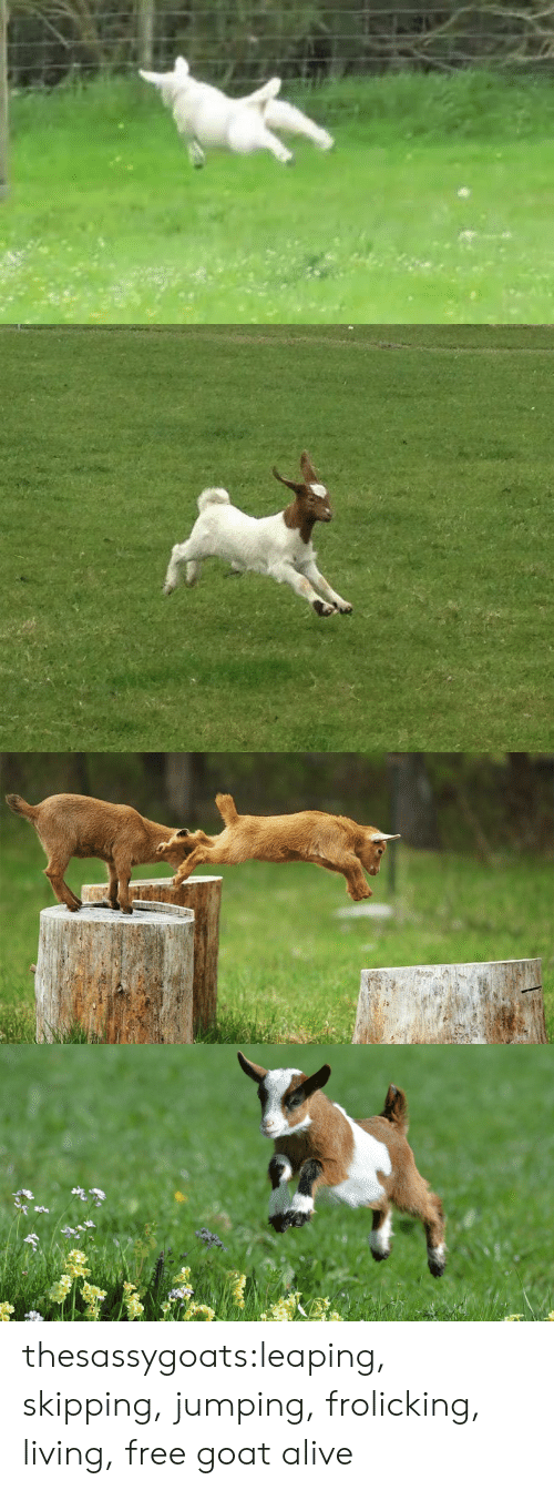 Alive, Target, and Tumblr: thesassygoats:leaping, skipping, jumping, frolicking, living, free goat alive