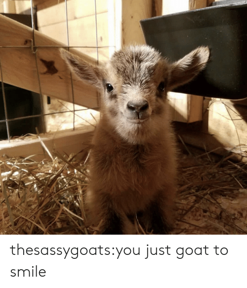 Target, Tumblr, and Goat: thesassygoats:you just goat to smile