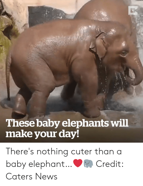 Cuter Than: These baby elephants will  make your day! There's nothing cuter than a baby elephant…❤️🐘  Credit: Caters News