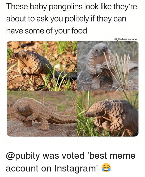 Food, Funny, and Instagram: These baby pangolins look like theyre  about to ask you politely if they can  have some of your food  _theblessedone @pubity was voted 'best meme account on Instagram' 😂