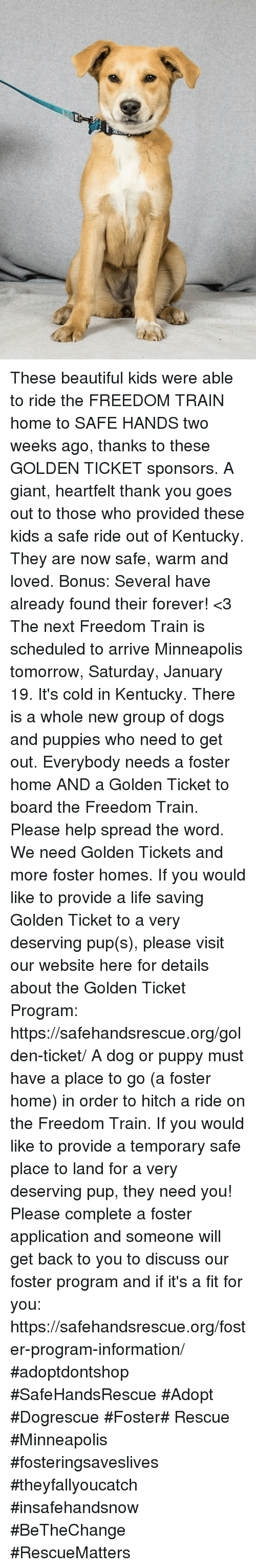 Beautiful, Dogs, and Golden Ticket: These beautiful kids were able to ride the FREEDOM TRAIN home to SAFE HANDS two weeks ago, thanks to these GOLDEN TICKET sponsors. A giant, heartfelt thank you goes out to those who provided these kids a safe ride out of  Kentucky. They are now safe, warm and loved. Bonus: Several have already found their forever! <3  The next Freedom Train is scheduled to arrive Minneapolis tomorrow, Saturday, January 19. It's cold in Kentucky. There is a whole new group of dogs and puppies who need to get out. Everybody needs a foster home AND a Golden Ticket to board the Freedom Train. Please help spread the word. We need Golden Tickets and more foster homes.  If you would like to provide a life saving Golden Ticket to a very deserving pup(s), please visit our website here for details about the Golden Ticket Program: https://safehandsrescue.org/golden-ticket/  A dog or puppy must have a place to go (a foster home) in order to hitch a ride on the Freedom Train. If you would like to provide a temporary safe place to land for a very deserving pup, they need you! Please complete a foster application and someone will get back to you to discuss our foster program and if it's a fit for you: https://safehandsrescue.org/foster-program-information/  #adoptdontshop #SafeHandsRescue #Adopt #Dogrescue #Foster# Rescue #Minneapolis #fosteringsaveslives #theyfallyoucatch #insafehandsnow #BeTheChange #RescueMatters