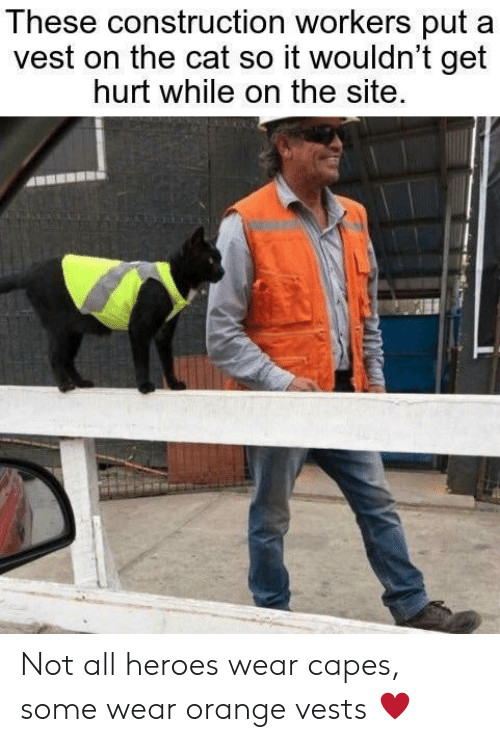 Heroes, Orange, and Construction: These construction workers put  vest on the cat so it wouldn't get  hurt while on the site. Not all heroes wear capes, some wear orange vests ♥️
