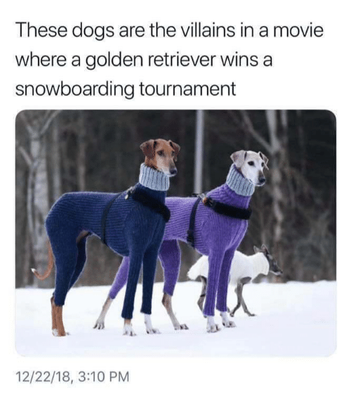 Dogs, Golden Retriever, and Movie: These dogs are the villains in a movie  where a golden retriever wins a  snowboarding tournament  12/22/18, 3:10 PM
