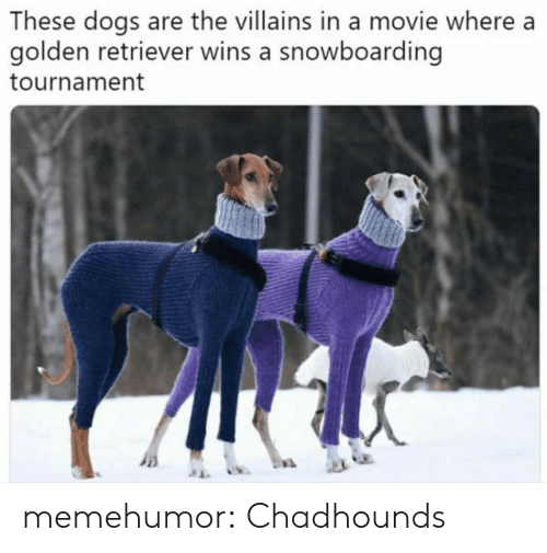 Dogs, Tumblr, and Blog: These dogs are the villains in a movie where a  golden retriever wins a snowboarding  tournament memehumor:  Chadhounds