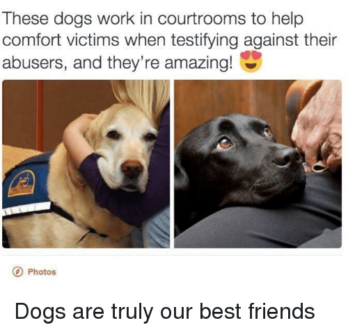 Dogs, Friends, and Work: These dogs work in courtrooms to help  comfort victims when testifying against their  abusers, and they're amazing!  Photos Dogs are truly our best friends