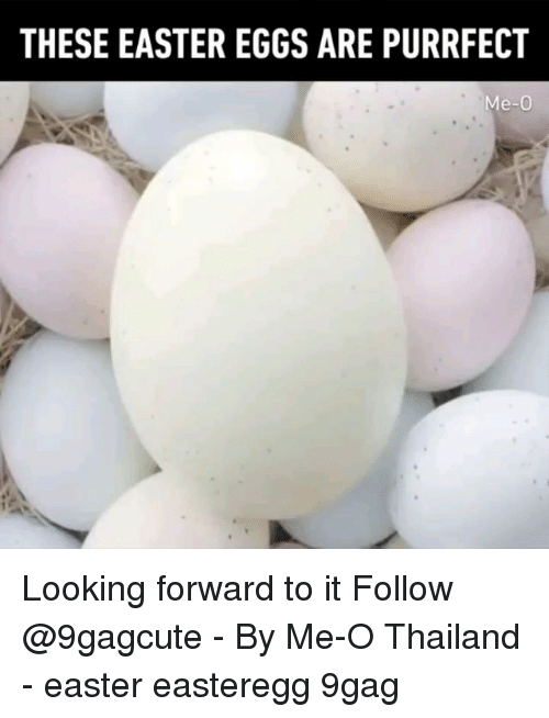 9gag, Easter, and Memes: THESE EASTER EGGS ARE PURRFECT  Me-0 Looking forward to it Follow @9gagcute - By Me-O Thailand - easter easteregg 9gag