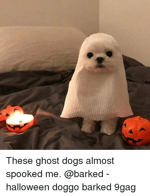 9gag, Dogs, and Halloween: These ghost dogs almost spooked me. @barked - halloween doggo barked 9gag