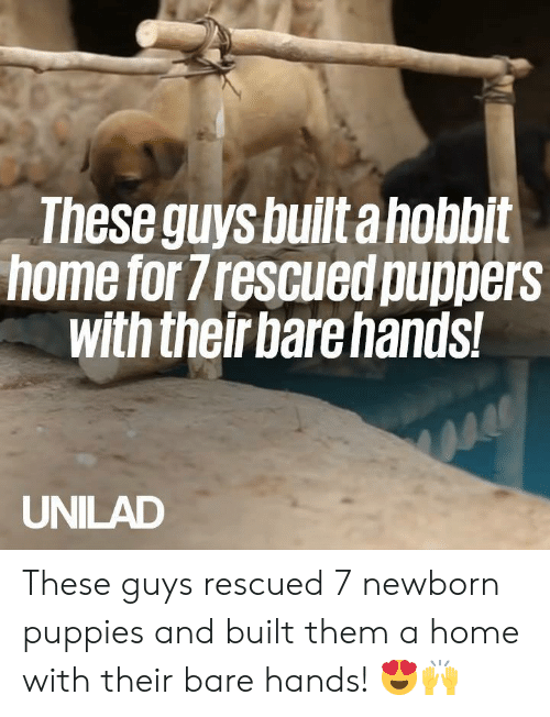 Dank, Puppies, and Home: These guys built ahobbit  home for frescued puppers  with theirbare hands!  UNILAD These guys rescued 7 newborn puppies and built them a home with their bare hands! 😍🙌