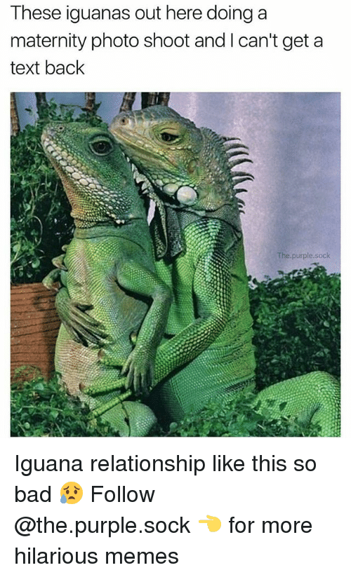 Bad, Memes, and Purple: These iguanas out here doing a  maternity photo shoot and I can't get a  text back  The.purple.sock Iguana relationship like this so bad 😥 Follow @the.purple.sock 👈 for more hilarious memes