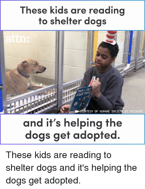 Dogs, Memes, and Humane Society: These kids are re  ading  to shelter dogs  TESY OF HUMANE SOCIETY OF MISSOURI  and it's helping the  dogs get adopted. These kids are reading to shelter dogs and it's helping the dogs get adopted.