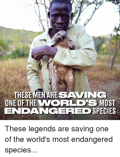 Dank, 🤖, and Legends: THESE MEN ARESAVING  ONE OF THE WORLD'S MOST  ENDANGERED  SPECIES These legends are saving one of the world's most endangered species...
