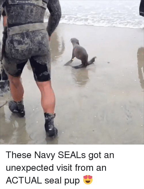 Navy, Seal, and Pup: These Navy SEALs got an unexpected visit from an ACTUAL seal pup 😍