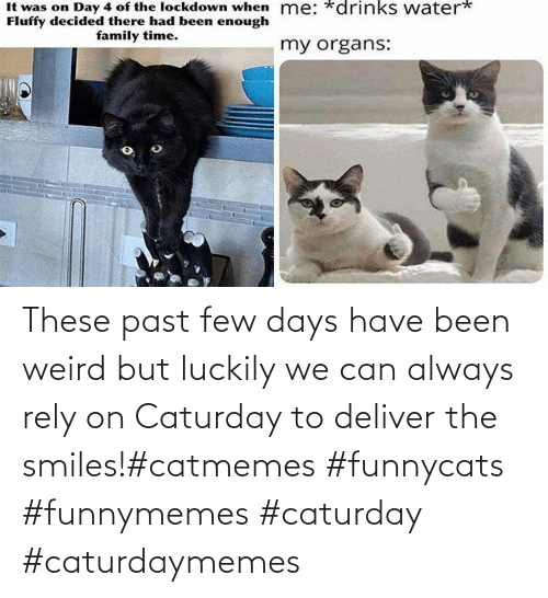 deliver: These past few days have been weird but luckily we can always rely on Caturday to deliver the smiles!#catmemes #funnycats #funnymemes #caturday #caturdaymemes