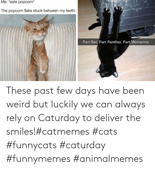 deliver: These past few days have been weird but luckily we can always rely on Caturday to deliver the smiles!#catmemes #cats #funnycats #caturday #funnymemes #animalmemes