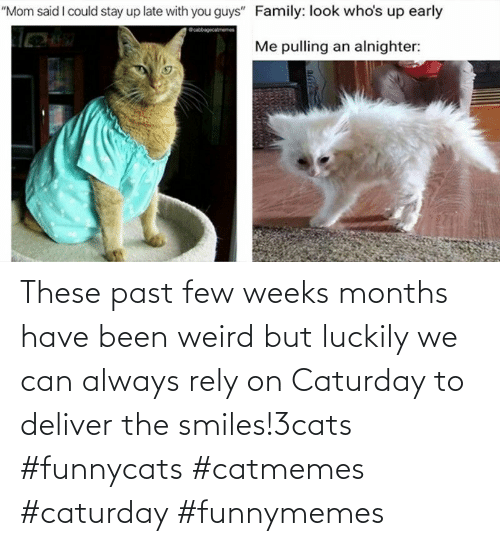 deliver: These past few weeks months have been weird but luckily we can always rely on Caturday to deliver the smiles!3cats #funnycats #catmemes #caturday #funnymemes
