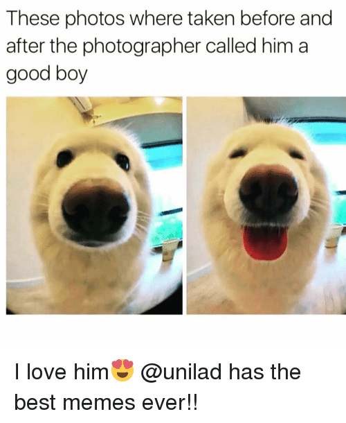 Funny, Taken, and Best Memes: These photos where taken before and  after the photographer called him a  good boy I love him😍 @unilad has the best memes ever!!