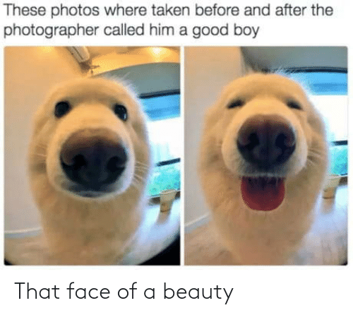 beauty: These photos where taken before and after the  photographer called him a good boy That face of a beauty