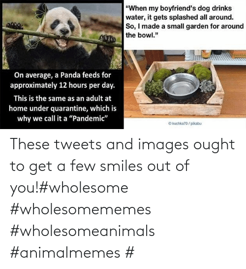 Tweets: These tweets and images ought to get a few smiles out of you!#wholesome #wholesomememes #wholesomeanimals #animalmemes #