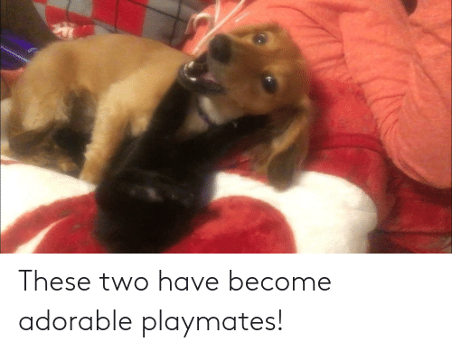 playmates: These two have become adorable playmates!