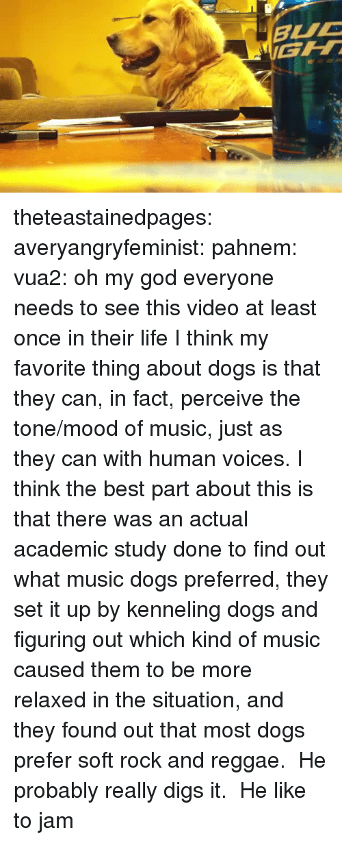 Dogs, God, and Life: theteastainedpages: averyangryfeminist:  pahnem:  vua2:  oh my god  everyone needs to see this video at least once in their life  I think my favorite thing about dogs is that they can, in fact, perceive the tone/mood of music, just as they can with human voices.  I think the best part about this is that there was an actual academic study done to find out what music dogs preferred, they set it up by kenneling dogs and figuring out which kind of music caused them to be more relaxed in the situation, and they found out that most dogs prefer soft rock and reggae. He probably really digs it.   He like to jam