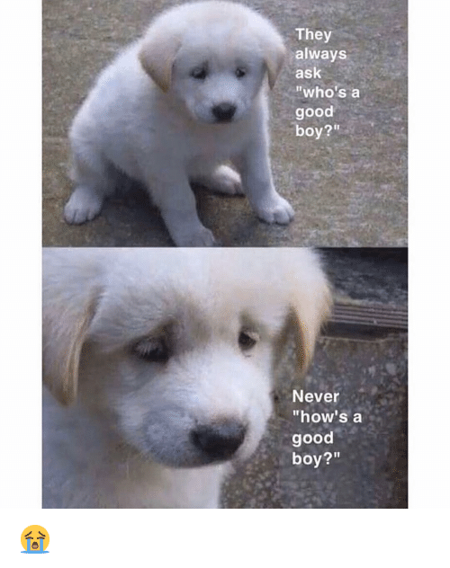 """Memes, Good, and Never: They  always  ask  """"who's a  good  boy?""""  Never  """"how's a  good  boy?"""" 😭"""