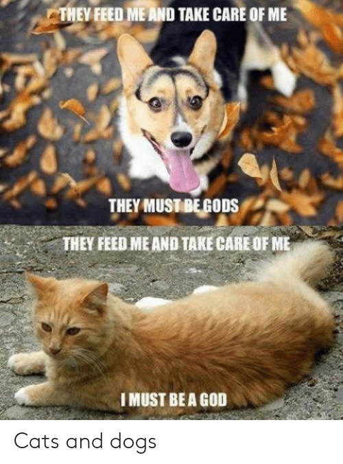Cats, Dogs, and God: THEY FEED ME AND TAKE CARE OF ME  THEY MUSTBEGODS  THEY FEED ME AND TAKE CARE OF ME  IMUST BEA GOD Cats and dogs