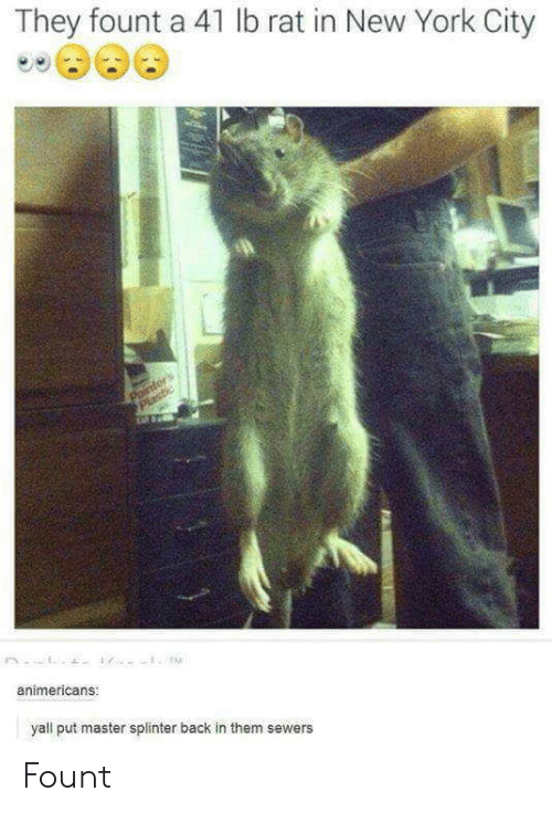 in-new-york-city: They fount a 41 lb rat in New York City  animericans  yall put master splinter back in them sewers Fount