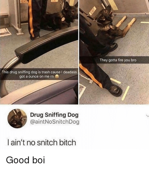 Bitch, Fire, and Snitch: They gotta fire you bro  This drug sniffing dog is trash cause I deadass  got a ounce on me rn  Drug Sniffing Dog  @aintNoSnitchDog  ain't no snitch bitch Good boi