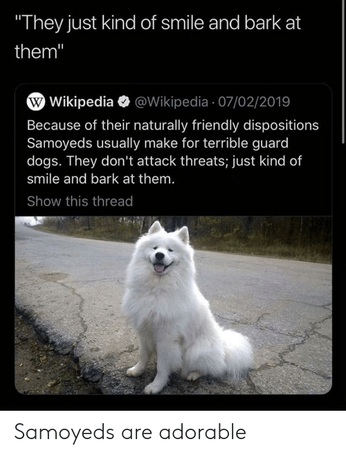 """Dogs, Wikipedia, and Smile: They just kind of smile and bark at  them""""  W Wikipedia @Wikipedia 07/02/2019  Because of their naturally friendly dispositions  Samoyeds usually make for terrible guard  dogs. They don't attack threats; just kind of  smile and bark at them.  Show this thread Samoyeds are adorable"""