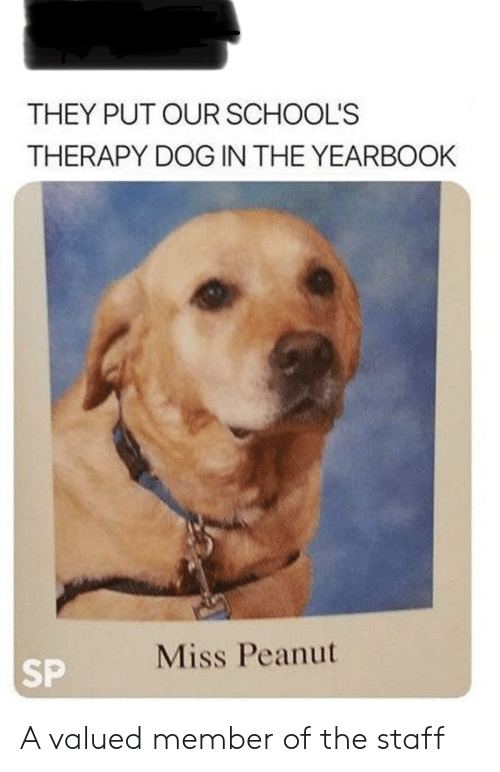 Dog, Staff, and They: THEY PUT OUR SCHOOL'S  THERAPY DOG IN THE YEARBOOK  Miss Peanut  SP A valued member of the staff