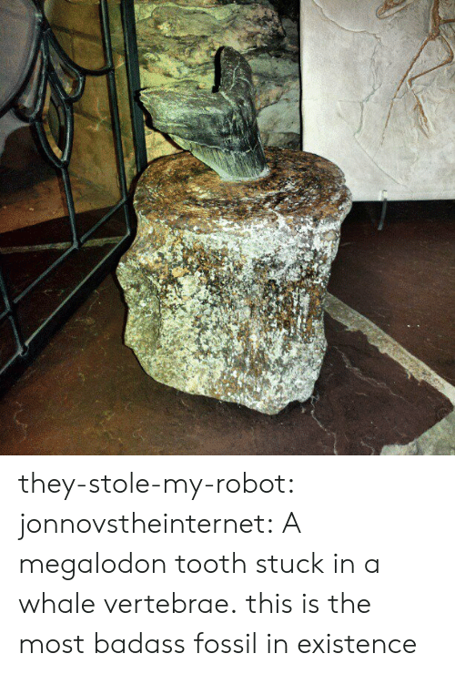 Tumblr, Blog, and Fossil: they-stole-my-robot: jonnovstheinternet:  A megalodon tooth stuck in a whale vertebrae.  this is the most badass fossil in existence
