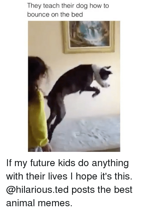 hopeing: They teach their dog how to  bounce on the bed If my future kids do anything with their lives I hope it's this. @hilarious.ted posts the best animal memes.