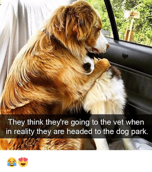 Dogs, Memes, and Reality: They think they're going to the vet when  in reality they are headed to the dog park. 😂😍